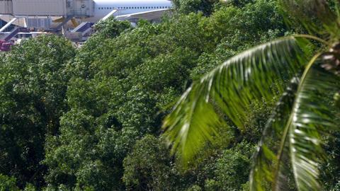 Airbus A320 airliner landing Acción en vivo