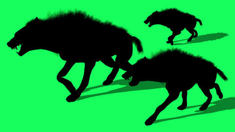 3d animation silhouette of Herd Of Hyenas Animals Walks on green screen Animation