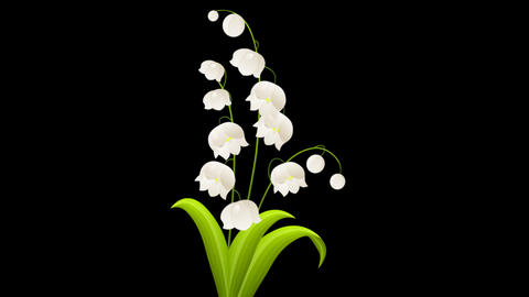 White Flower Animation Stock Video Footage