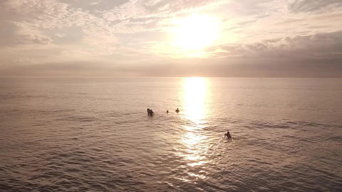 surfers in sunlight Live影片