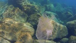 Plasticbag floating under water Footage