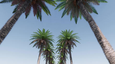 Alley of palm trees Summer tropical leaf. Summer nature landscape. Paradise Live Action