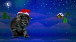 Little funny cat in red Santa Claus hat yawns, waiting for Christmas eve Footage