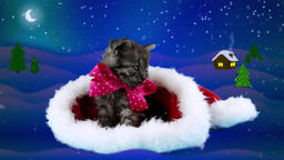 Merry Christmas card with text, adorable beautiful cat with pink bow Footage