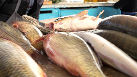 Fresh carp are sold on the market delicious fresh fish useful seafood Live Action
