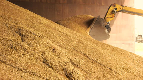 Loading grain into backhoe heap of yellow crop in grain factory storage Live Action