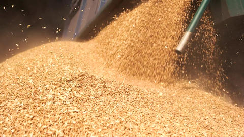 Pouring grain in the pile close up flowing grain cereals in a heap Live Action