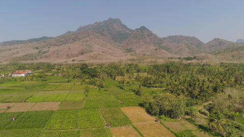 agricultural land in indonesia Live Action