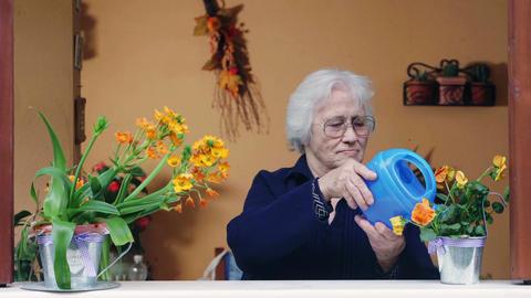 Elderly lady waters flowers on the windowsill Footage