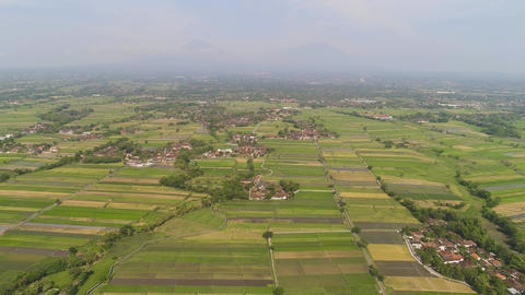 Rice field and agricultural land in indonesia Live Action