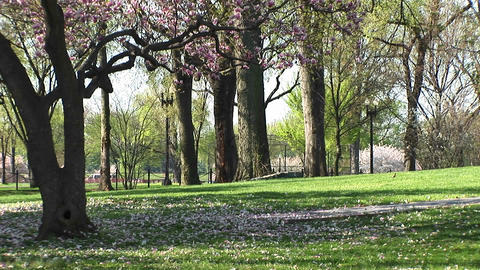 Beautiful blossoms rest on the grass near the tree from... Stock Video Footage