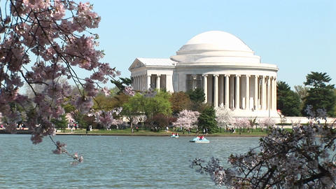The Jefferson Memorial in Washington, DC is framed by branches full of cherry blossoms Footage