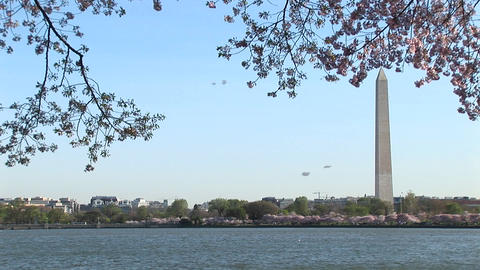 The Washington Monument is framed by beautiful cherry... Stock Video Footage