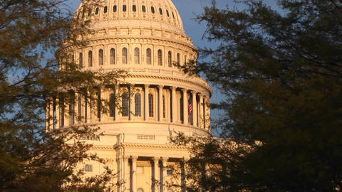 Looking through the trees, up the side of the U.S. Capitol building during the golden hour Footage
