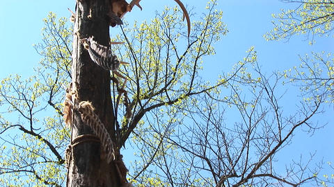 Feathers stuck on this tree move in the wind like leaves Stock Video Footage
