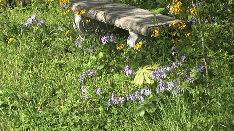 Picturesque footage displays a stone bench with curved legs dappled by the sun and surrounded by ove Footage