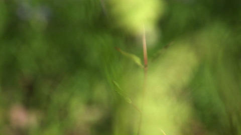 Camera zooms passed sun-dappled buds on a stem to focus... Stock Video Footage