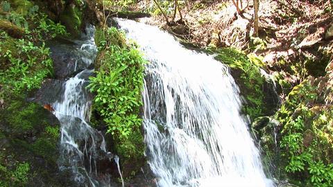A rushing waterfall flows around lush vegetation Stock Video Footage