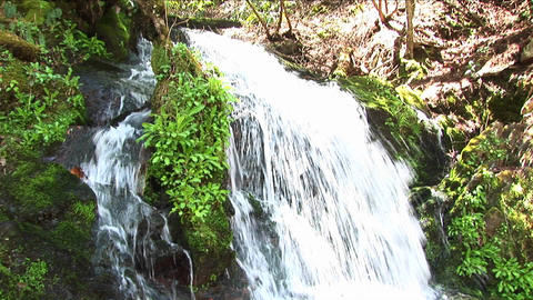 A rushing waterfall flows around lush vegetation Footage