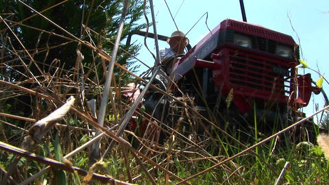 A man mowing with a small tractor drives past the camera Footage