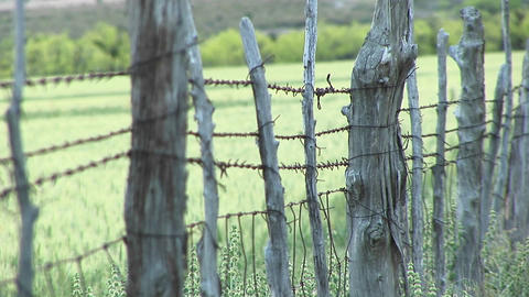 Close-up of barbed-wire wrapping around cedar fence posts Footage
