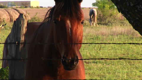 A horse looks through a barbed wire fence Stock Video Footage