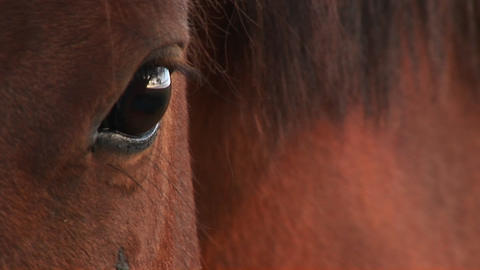 Extreme-close-up of a horse's right eye Stock Video Footage