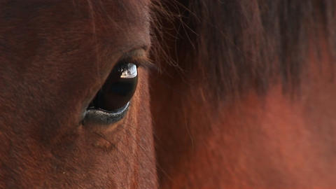 Extreme-close-up of a horse's right eye Footage