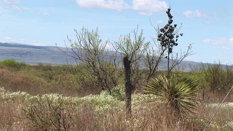 Medium-shot of a fence post in the desert Stock Video Footage