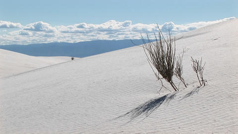 Medium shot of a scraggly plant at White Sands National... Stock Video Footage