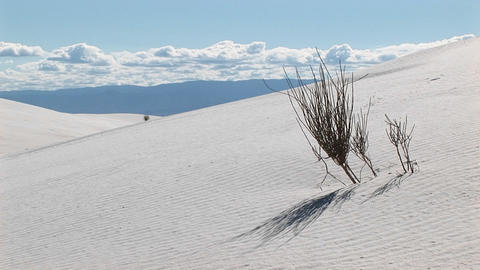 Medium shot of a scraggly plant at White Sands National Monument in New Mexico Footage