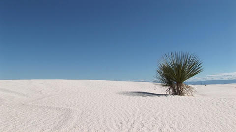 Long-shot of a plant at White Sands National Monument in... Stock Video Footage