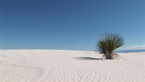 Long-shot of a plant at White Sands National Monument in New Mexico Footage