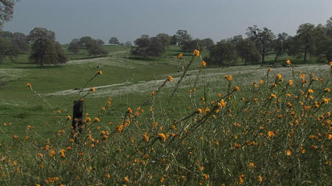 Medium-shot of wildflowers blooming on a California hillside Stock Video Footage