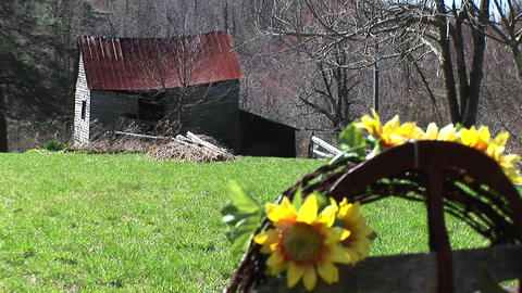 Medium shot of artificial sunflowers in a field near a dilapidated mountain cabin Live Action