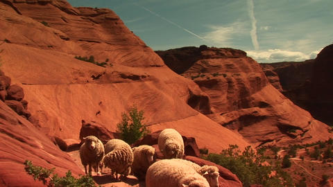 Medium shot of a herd of sheep walking along a path in... Stock Video Footage
