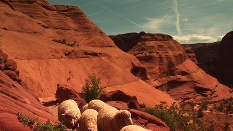 Medium shot of a herd of sheep walking along a path in Canyon De Chelly Footage