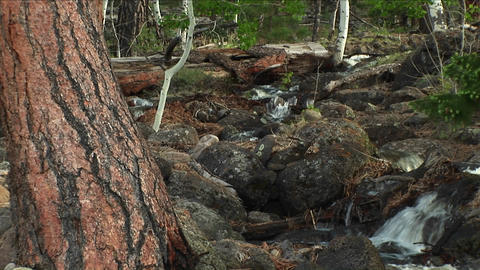 Medium shot of a mountain stream flowing through a forest Stock Video Footage