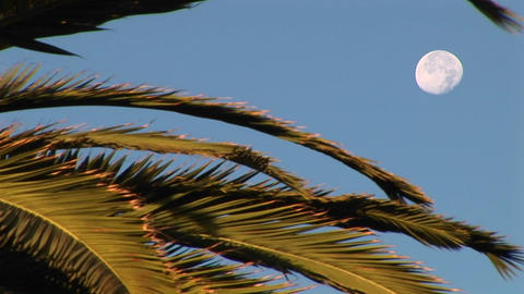Medium shot the branches of a palm tree in front of a... Stock Video Footage