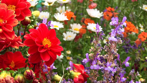 Close-up of a variety of wildflowers swaying in the breeze of a California forest Footage