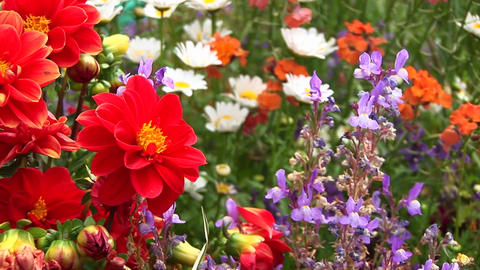 Close-up of a variety of wildflowers swaying in the... Stock Video Footage