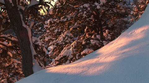 Medium shot of the golden-hour sun coloring fresh fallen... Stock Video Footage