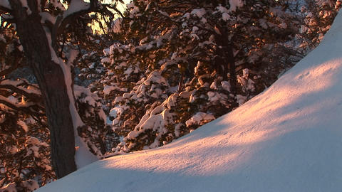 Medium shot of the golden-hour sun coloring fresh fallen snow in Grand Canyon National Park Footage