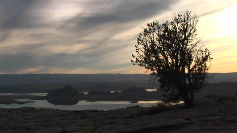 Medium wide shot of lone tree silhouetted by Lake Powell... Stock Video Footage