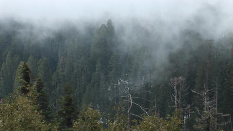 High-angle of a forest of pine trees being enveloped in a... Stock Video Footage
