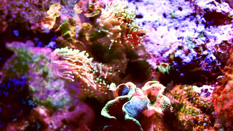 Multicolored coral shot with fish projections Live Action