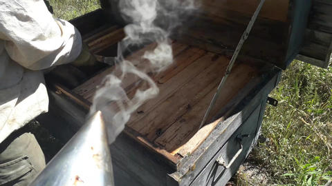 Smoker for fumigating bees in hives Live Action