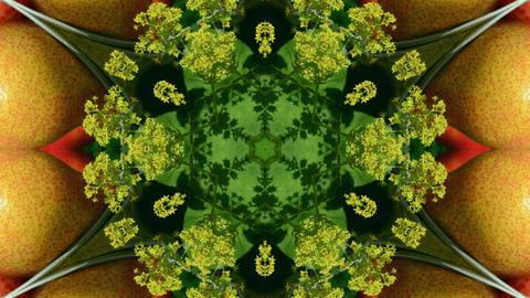 Kaleidoscope fruit vegetable 4k345 Footage