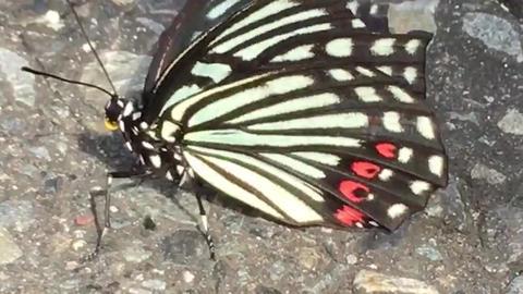 Butterfly ビデオ