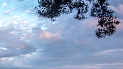 Rain clouds that run on top of a lonely branches of a pine 2f Footage